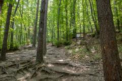 Пътеката, която води към водопада. Снимка: ToGood Photos