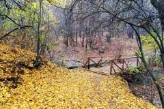 Килим от есенни листа