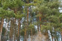 Пътека на здравето Банкя_12. Снимки - Turgut's Photos