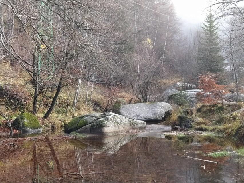 Всети природата. Гора ... Мъх през декември. Мъх, облякъл се камъни в страници от пътечката в зелено. Снимка: ToGood Photos