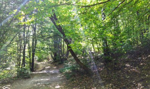 "Маршрути из Витоша: Екопътека от Железница до Бистрица – алея ""Галунка"""