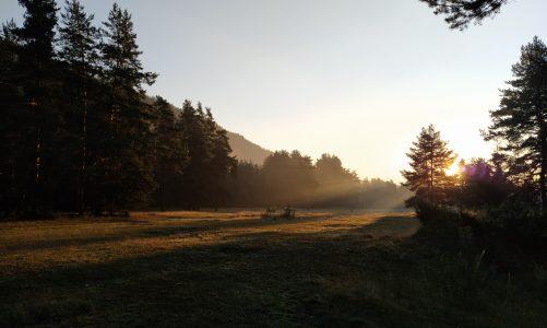 Един ден релакс в гората