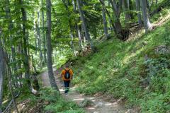 Пътеката до Боянския водопад е тясна, но много приятна. Снимка: ToGood Photos