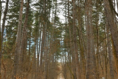 Пътека на здравето Банкя_5. Снимки - Turgut's Photos